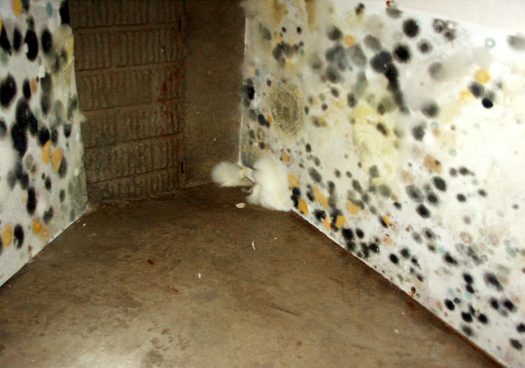 Photo Of Mold