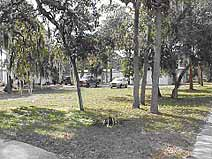 Photo of Angel Tree site before development